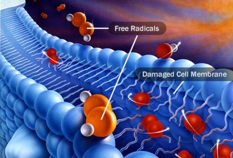 Radicaux libres et antioxydants naturels