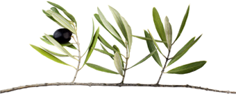 olive leaf extract cough relief