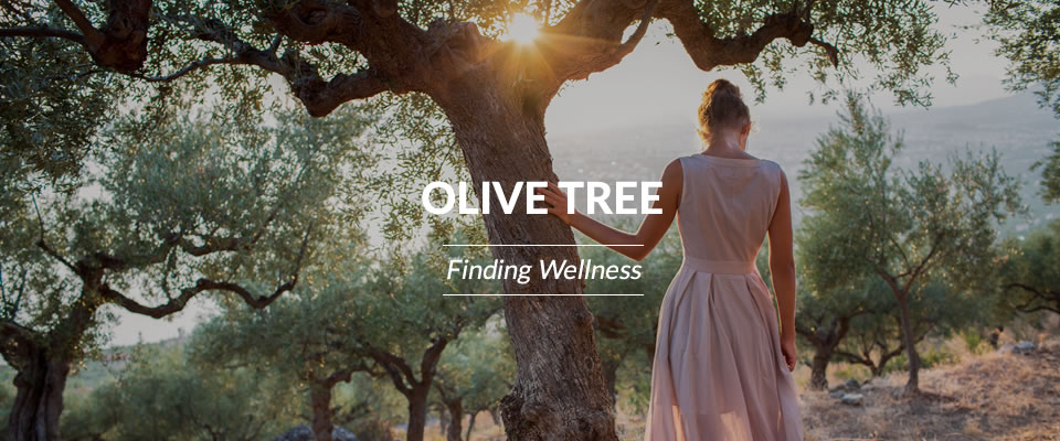 Olive Tree Finding Wellness