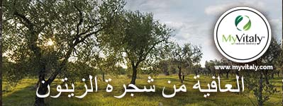 Olive_Trees_Italy_Greece_Facebook2_AR