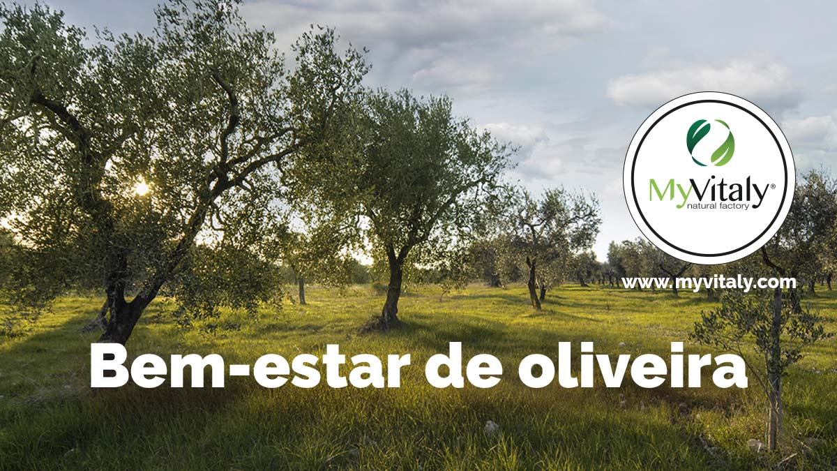Olive_Trees_Italy_Greece_Facebook2_PT