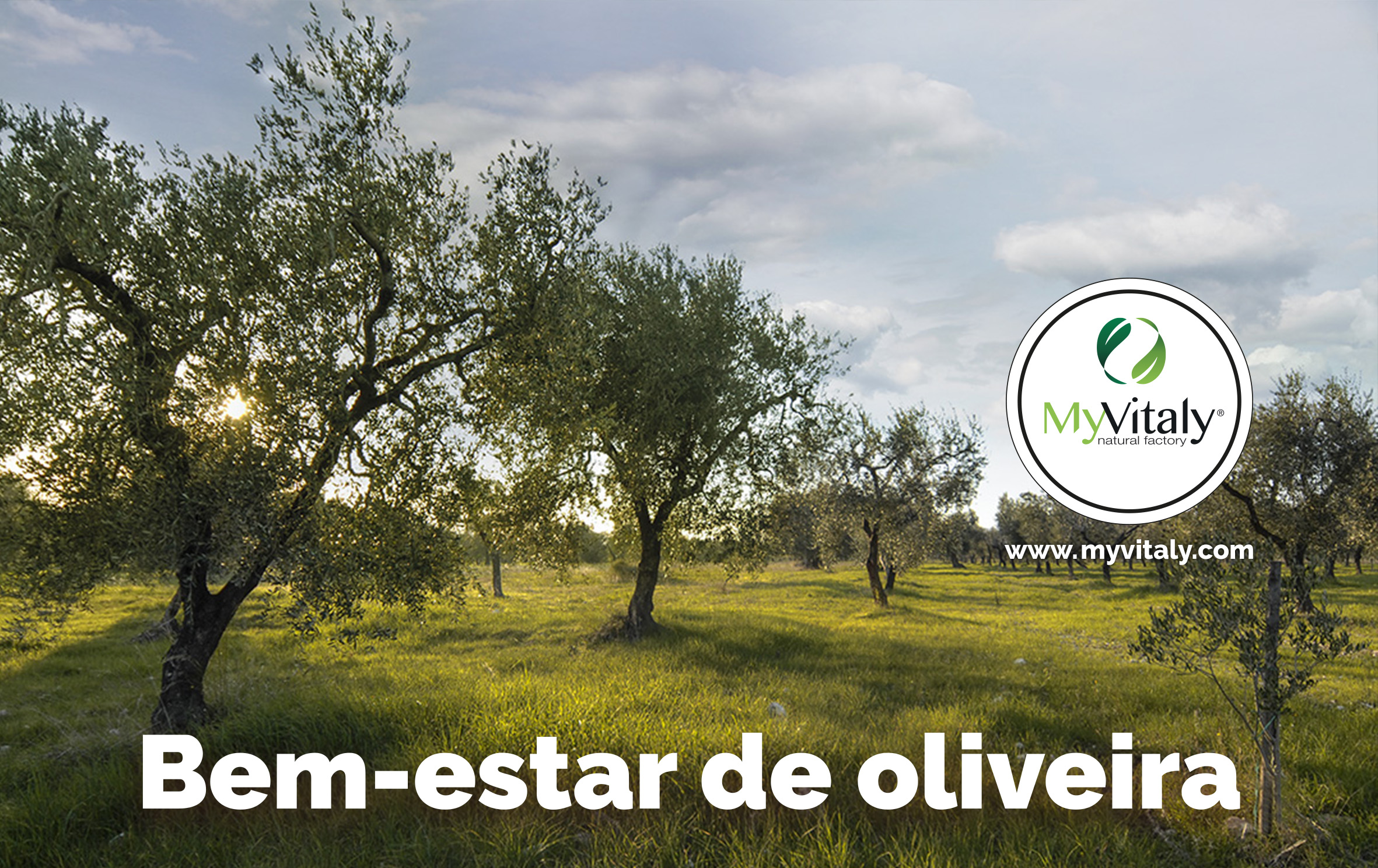 olive_trees_spain_italy_spain_image_PT
