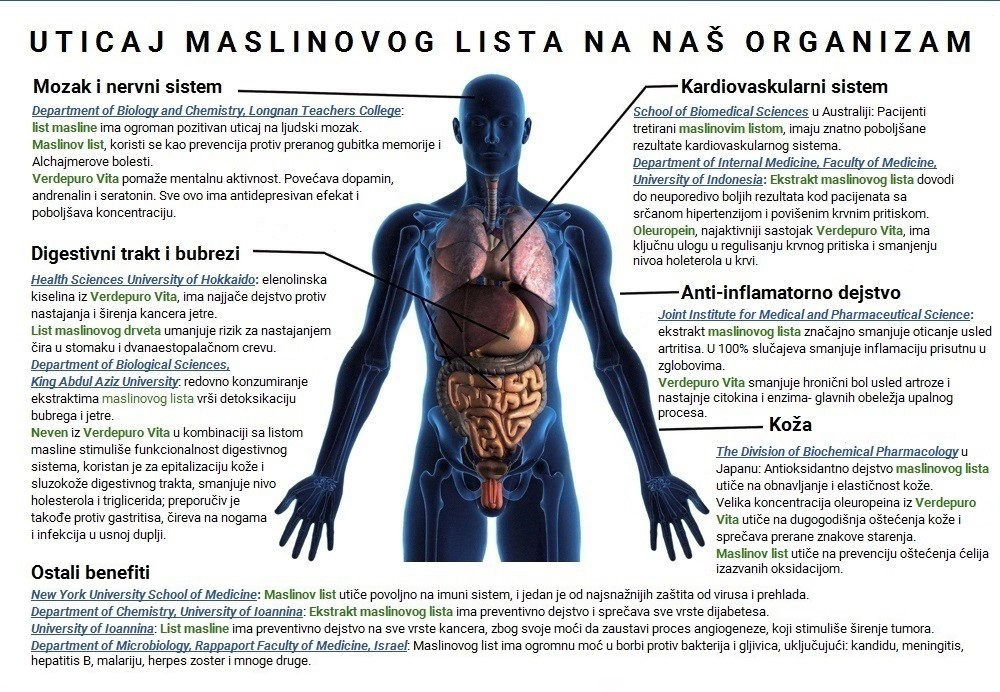 uticaj maslinovog lista na coveka